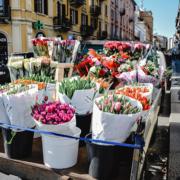 Pasen 2020 geen Nederlandse bloemen in Vaticaanstad door Coronavirus